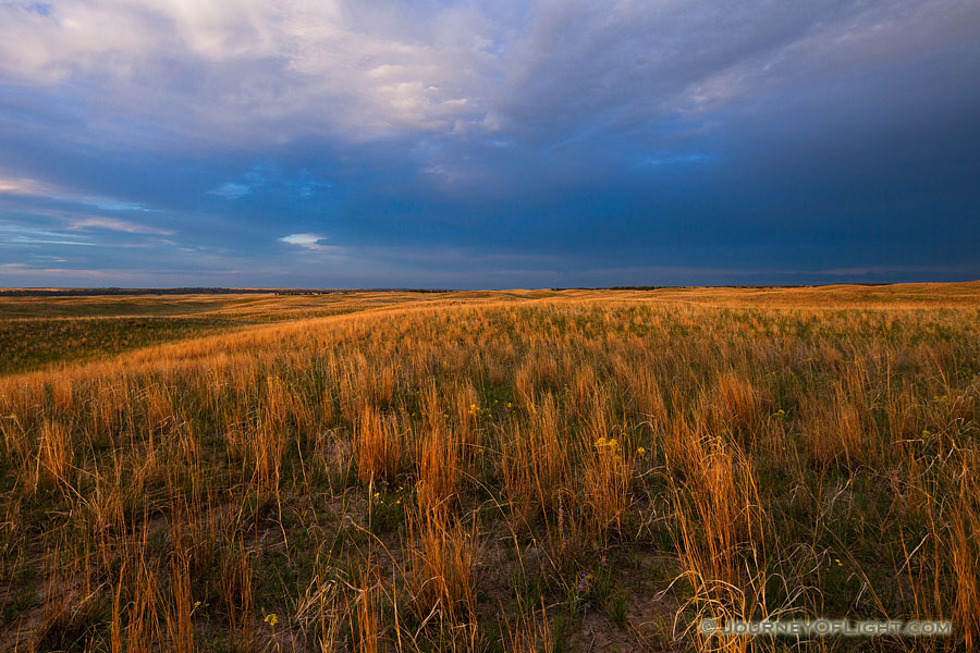 Dark clouds hover over the rolling sandhills in McKelvie National Forest as the last light of the setting sun illuminates the prairie grasses. - Sandhills Photography