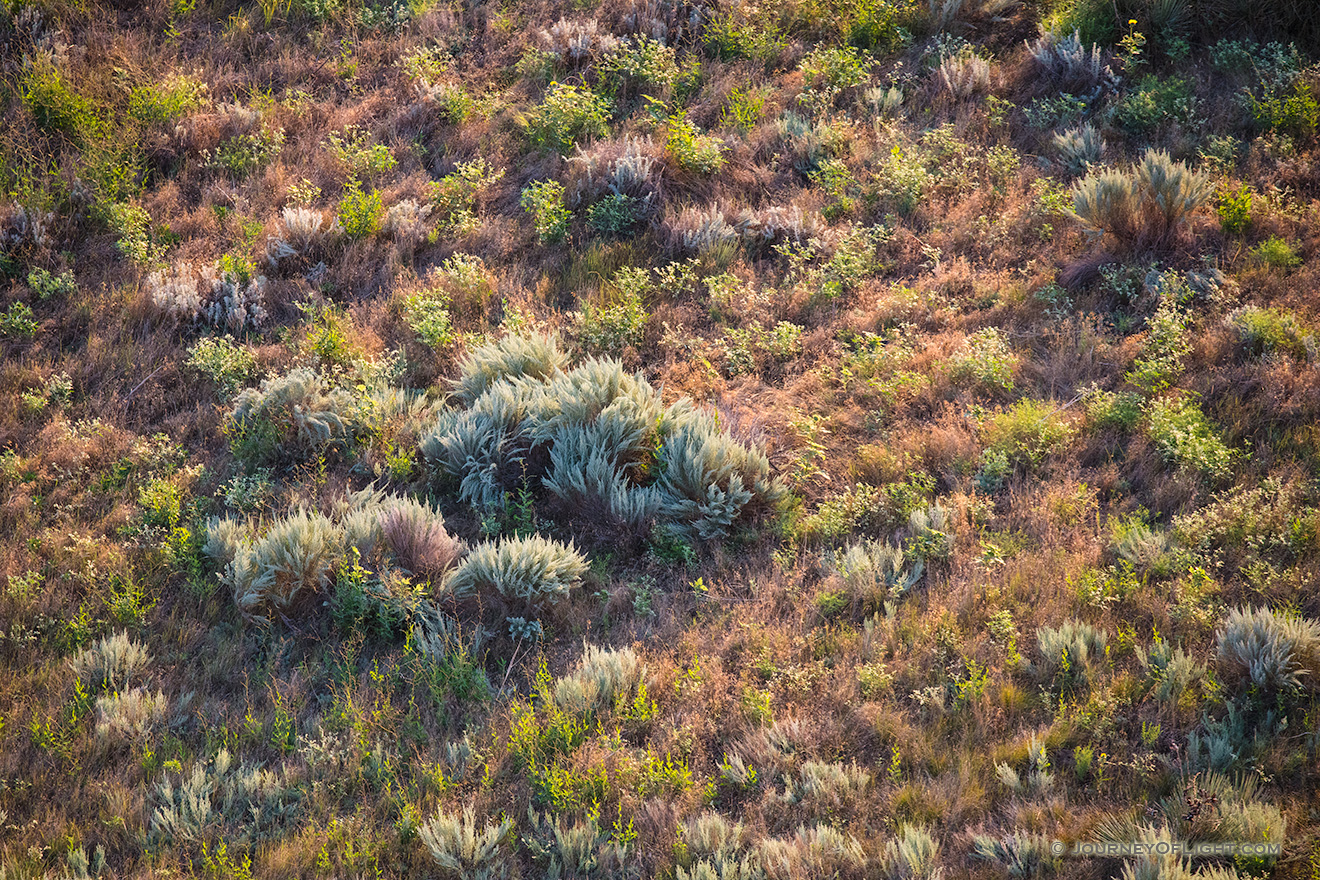 An abstract of foliage illuminated by the summer sunrise in western Nebraska. - Nebraska Picture