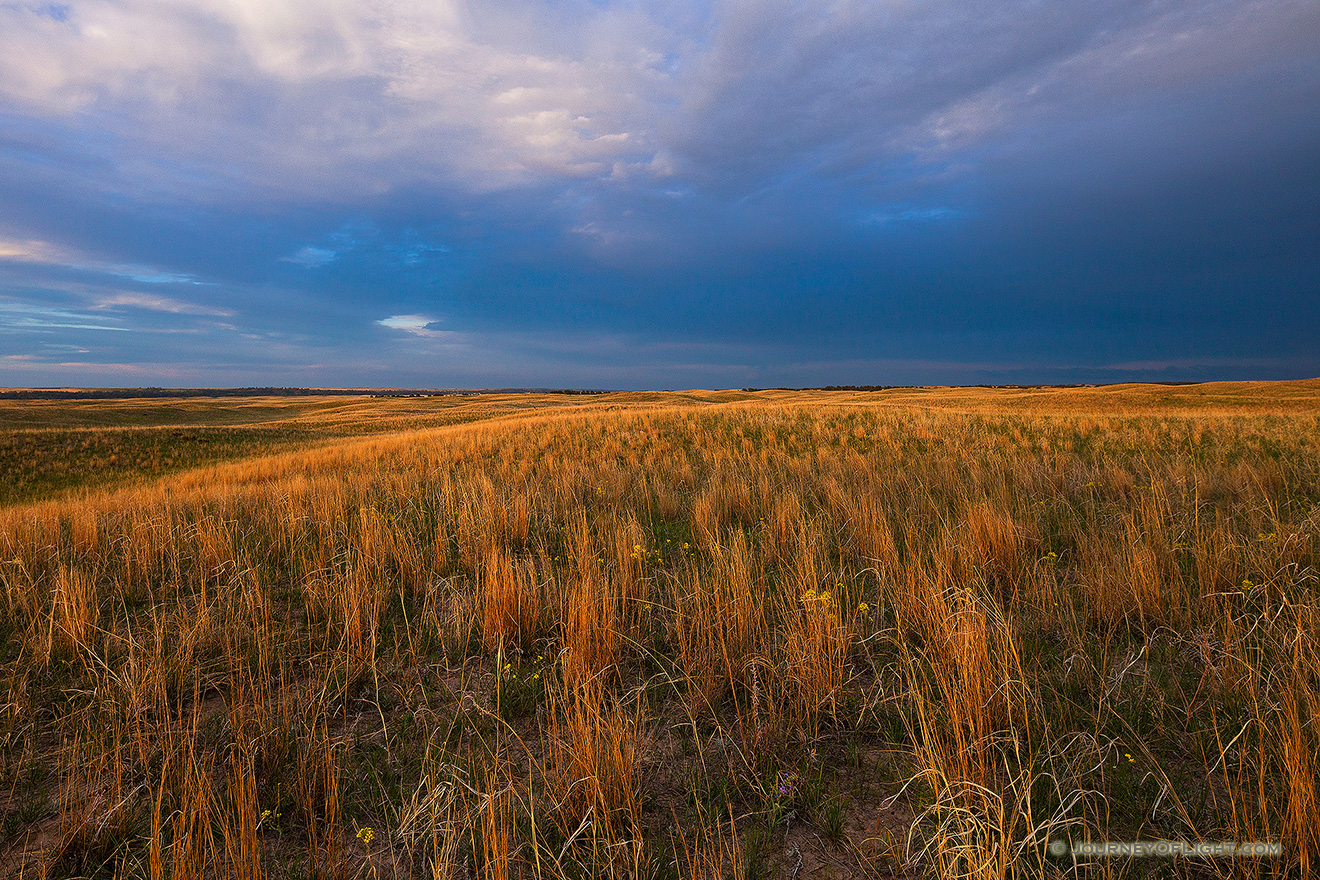 Dark clouds hover over the rolling sandhills in McKelvie National Forest as the last light of the setting sun illuminates the prairie grasses. - Sandhills Picture