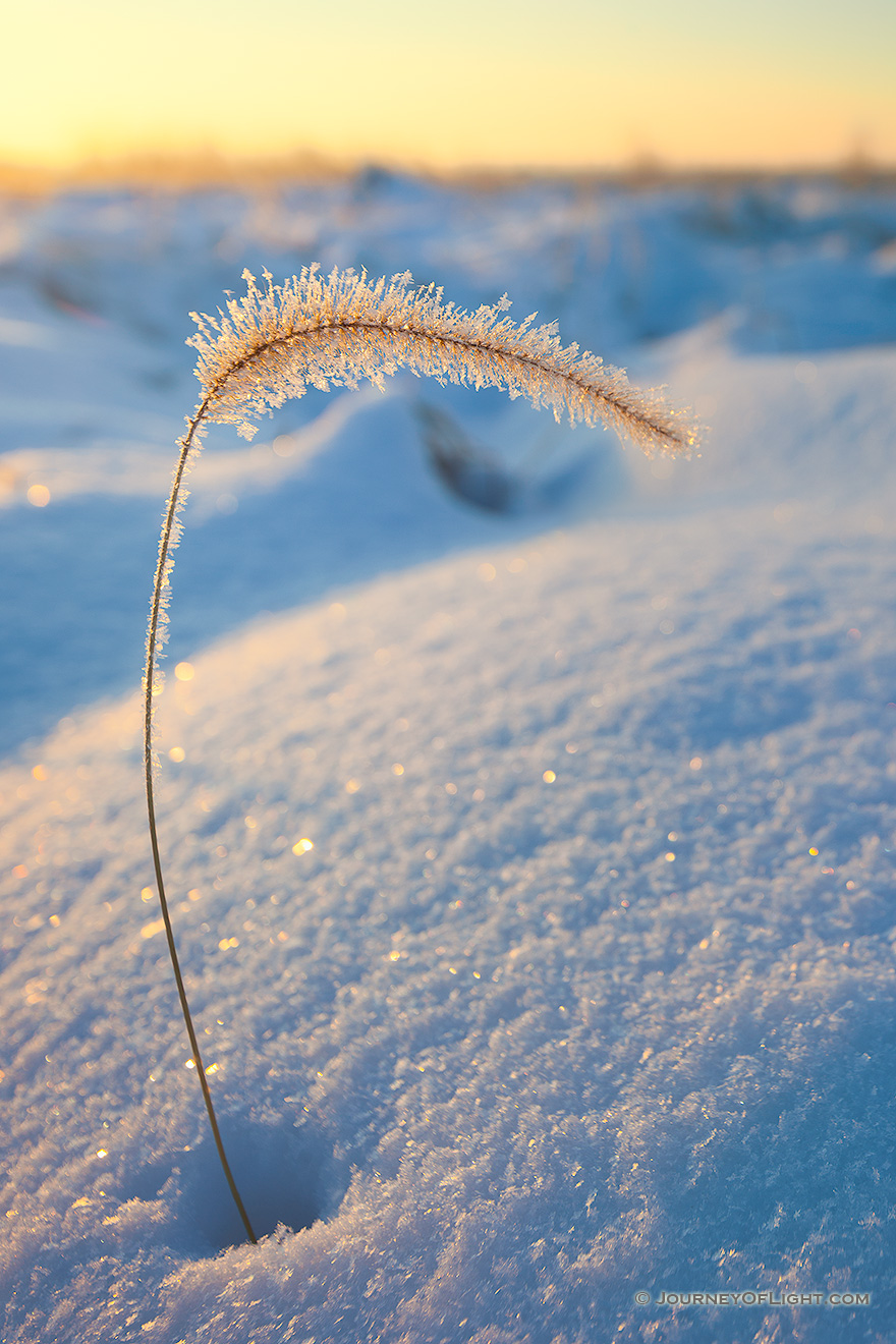 Ice coated grass pokes out from the recent snow at Boyer Chute National Wildlife Refuge. - Boyer Chute Picture