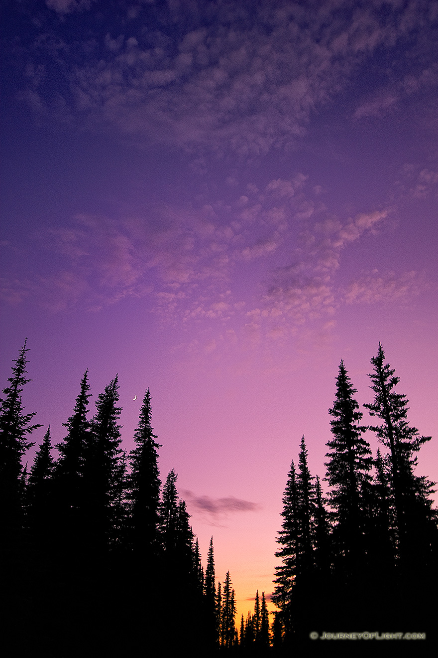 At Hurricane Ridge at Olympic National Park, Washington the crescent moon rose out of a beautiful sunset above the pine trees. - Pacific Northwest Picture